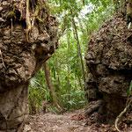 Der Dschungelweg zur Aussichtsplattform über dem Las Nubes