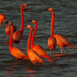 ....die Farben haben uns fasziniert - kommt vom Futter (rote Krabben)....