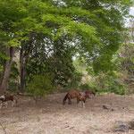 ....Guido & Agi haben viele Pferde - und bieten Ausritte an.....