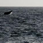 ...und viele Wale....