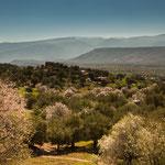...die Mandelbäume stehen in voller Blüte...