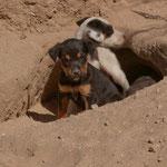 Diese wilden Hundebabies hat Rita mit Begeisterung gefüttert.