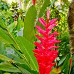 überall exotische Blumen