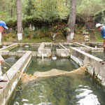 A trout (trucha) hatchery in the mountains....