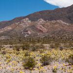 """Der Nationalpark """"Los Cardones"""" hat uns begeistert - siehe Bilder"""