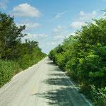 Die meisten Strassen in Yucatan führen durch grünen Urwald