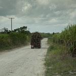 Zuckerrohr Laster - die einzigen Verkehrsteilnehmer ausser uns.