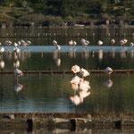 heute voll mit Flamingos