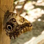 ......und dann das Resultat - die Schmetterlinge (die Namen kennen wir nicht).