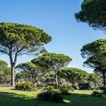 """Der """"Parque Natural de la Brena y Marismas del Barbate"""""""