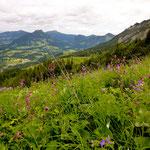 Die nächsten Bilder zeigen Eindrücke der wunderschönen Allgäuer Alpen