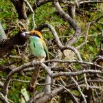 Die nächsten Bilder zeigen die wunderschönen Vögel die wir gesehen haben