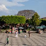 .....der Zocalo mit tollen Bäumen....