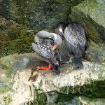 ...leider kenn wir den Namen dieses wunderbaren Seevogels nicht...