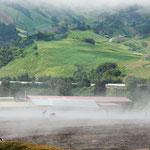 Nebel auf dem feuchten und warmen Vulkanboden.....
