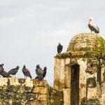 .....unter dem Kommando des Pelikans.....
