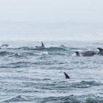 """Von Punta Choros mit dem Boot zu den Inseln """"Choros"""" und """"Damas""""..."""