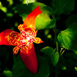 Diese tolle Blume fanden wir auf unserer Wanderung im Dschungel