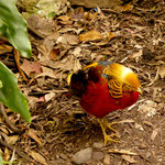Australien ist voller bunter Vögel