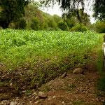 .....auch diese Bewässerungskanäle sind uralt......
