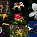 ...und all diese Blumen.