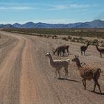 ...und viele Lamas...