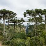 ...diese tollen Bäume habe es uns angetan...