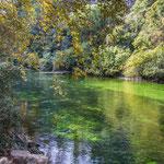 ...obwohl die Hauptquelle nach dem trockenen Sommer fast versiegt ist fließt immer noch viel Wasser...