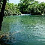 Direkt am Ecoturismo Center ist dieser wunderbare Urwaldfluss - ideal zum Baden