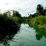 """hier noch """"unverdünnt"""" als Süsswasserfluss gesäumt von unzähligen Dattelpalmen"""