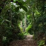 ....haben uns auf unserem engen Urwaldpfad begleitet.....