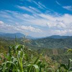 ....und immer wieder sieht man an steilsten Berghängen Maisfelder....