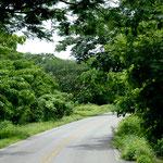 Extrem dichter und grüner Dschungel.....