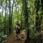 ....und oberhalb 800 m ist toller dichter Regenwald.....