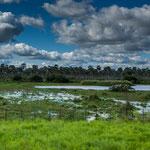 ...die Sumpfgebiete ziehen viele Wasservögel an...