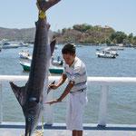 Ein Merlin - Zihuantanejo ist ein Fischerparadies