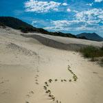 ...Auf hohen Sanddünen kann man sogar Sand-Boarding machen...