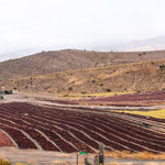 """Auch auf dieser Strecke die """"Rosinen Trocknungsanlagen"""" - ein großes Exportprodukt Chiles..."""