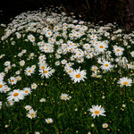 ....Botanischer Garten....