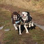 Mit Manfred, dem Spanier, fing ich an, frierende Hunde einzudecken. Auch die junge, muskulöse Bulldogge, die schnell mit den Zähnen klappert.
