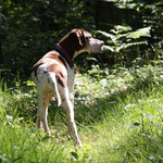 Durch und durch ein großartiger Hund!!! Auf immer in meinem Herzen!!!