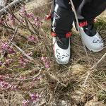 bald darauf war Frühlingstimmung angesagt