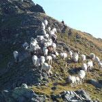 Als wir kamen, fürchteten, flüchteten sogar die Schafe :-)
