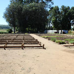 The tree nursery of the Haramaya University provides trees for watershed management to the  local  communities