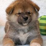 Michiko 6 Wochen alt