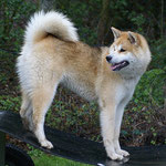 Michiko auf dem Hundplatz