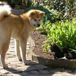 Michiko und Luna im Garten