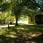 Bîtes Bouleau et Cerisier