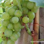 Der Ursprung jeden Weines