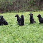 das beste Gruppenfoto überhaupt :-) v.l.n.r. Hilaria, Minerva, Meo, Maximos, Marlena, Maris, Mhila-Casey, Riley